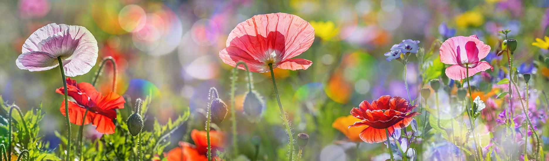 bunte Blumenwiese | Kerzen für Sternenkinder