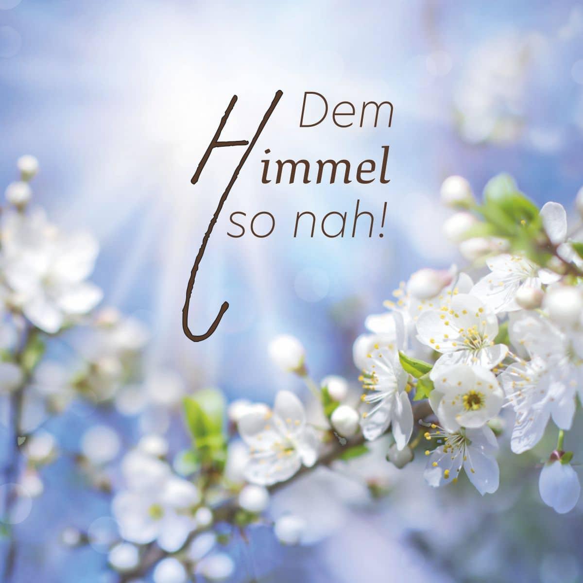 Hofer Premium 4 Tage Motivlicht, APFELBAUM